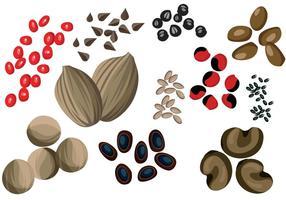 Vecteurs de graines vecteur