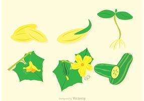 Vecteurs de plantes au concombre vecteur