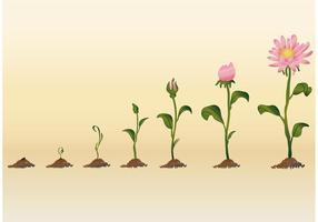 Vecteurs de fleurs en pleine croissance vecteur