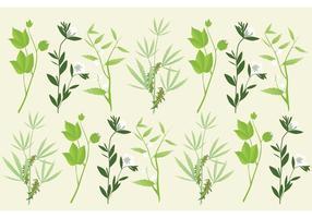 Vecteurs de plantes à la botanique vecteur