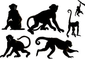 Les vecteurs de singes