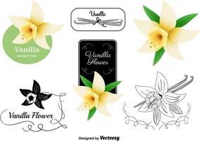 Ensemble de vecteurs de fleurs de vanille vecteur