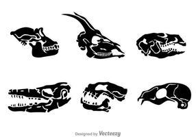 Vecteurs de crâne de tête d'animal