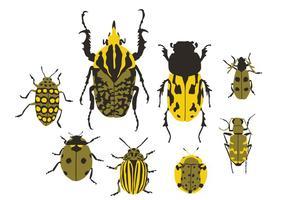 Coléoptères vecteur