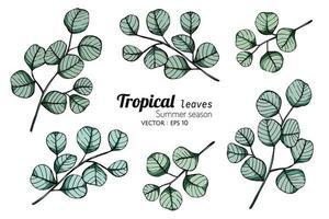 feuilles tropicales feuilles dessinées à la main vecteur