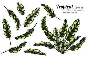 Ensemble de feuilles de jungle dessinés à la main vecteur