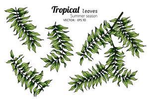 ensemble de dessins de feuilles de fougère vecteur