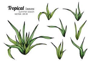 ensemble de pousses de feuilles tropicales vecteur