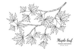 illustration dessin feuille d'érable vecteur