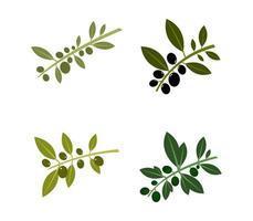 ensemble d'icônes d'olives vecteur