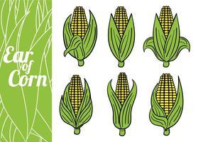 Vecteurs d'oreille de maïs vecteur