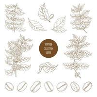 ensemble de botanique café vintage