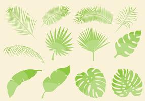 Vecteurs de feuilles tropicales vecteur