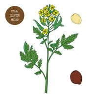 ensemble de botanique vintage moutarde vecteur