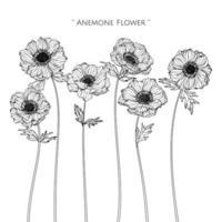 fleur d'anémone et conception de feuilles dessinées à la main vecteur