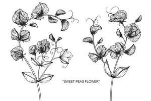 fleur de pois sucrés et conception de feuilles dessinées à la main vecteur