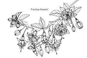 Ensemble de feuilles de fleurs fuchsia dessinées à la main vecteur