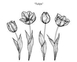 fleurs de tulipes dessinées à la main vecteur