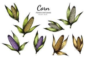conception botanique de maïs dessiné à la main vecteur