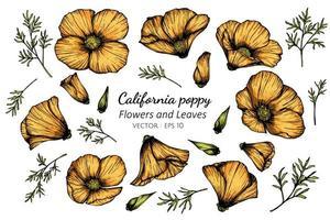 fleur de pavot californie orange dessiné à la main vecteur