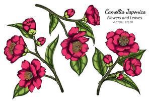 fleur de camélia japonica rose dessiné à la main vecteur