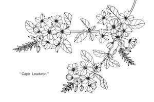 fleurs de leadwort cape dessinés à la main vecteur