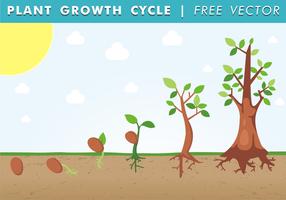Cycle de croissance des plantes vecteur gratuit