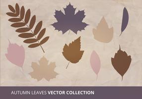 Collection de vecteur feuilles d'automne