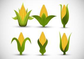 Épi de maïs vecteur
