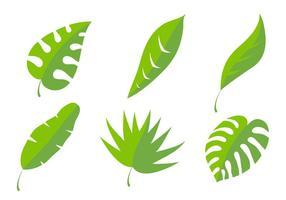 Vecteurs de feuille de palmier vecteur