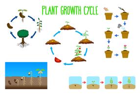 Vecteur libre du cycle de croissance des plantes