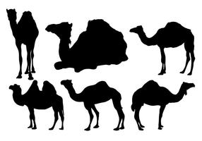 Vecteur de silhouette de chameau gratuit
