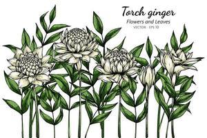 flambeau blanc fleurs de gingembre vecteur