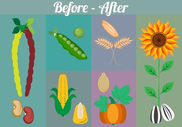 Coleção de vetores de sementes e plantas
