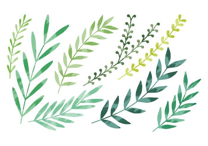 Folhas de aquarela de vetor