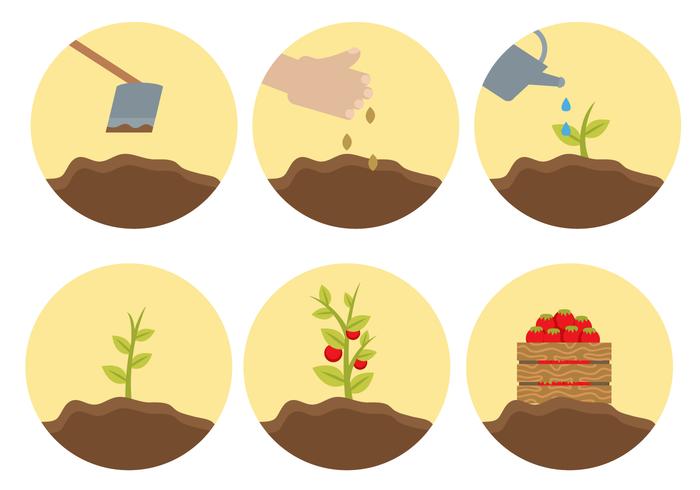 Vector de ciclo de vida da planta livre