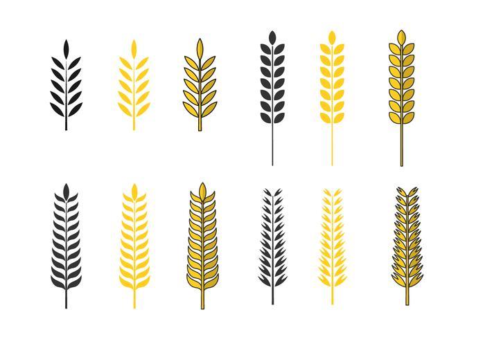 Conjunto de vetores de aveia dourada