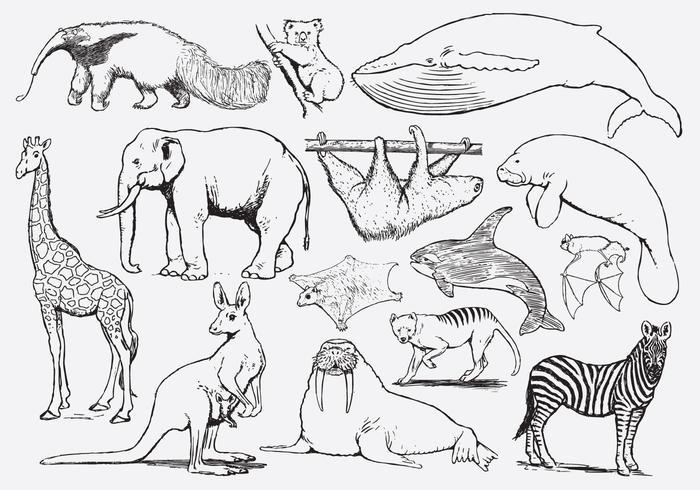 Colorir animais para crianças vetor