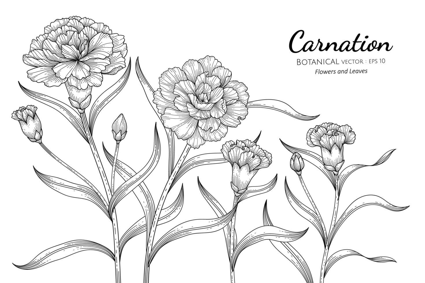 folhas e flores de cravo de mão desenhada vetor