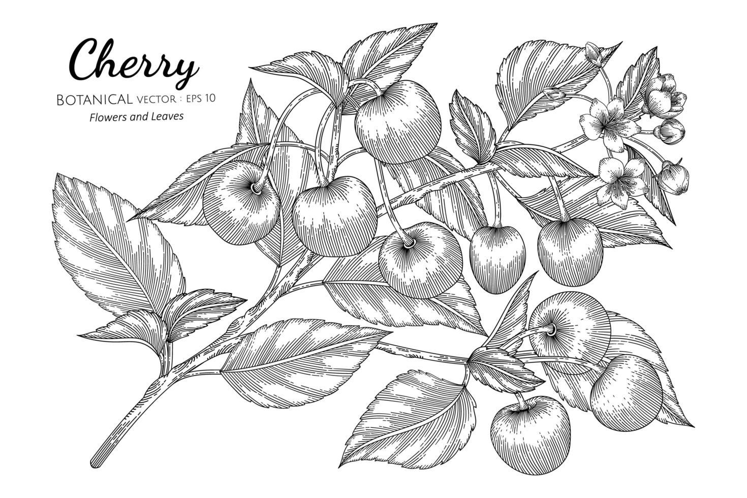mão desenhada cereja fruta vetor