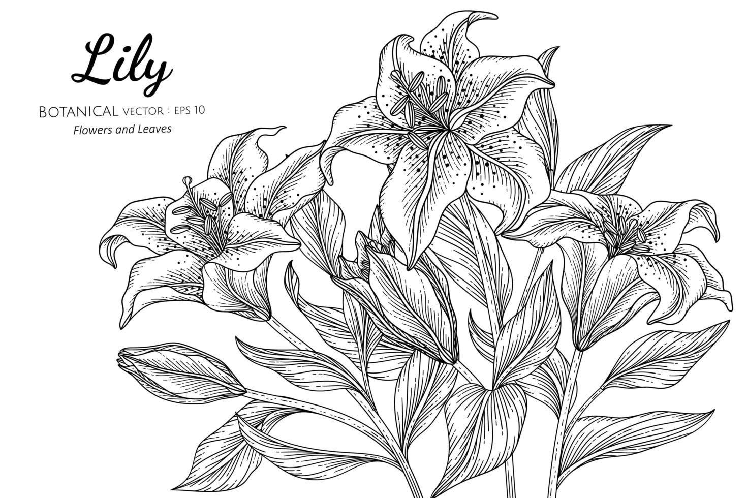 buquê de flores e folhas de lírio de mão desenhada vetor