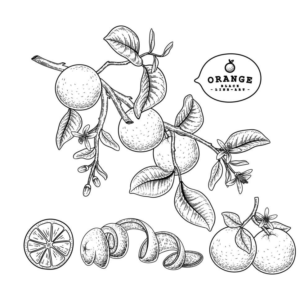 conjunto de arte linha de frutas cítricas vetor