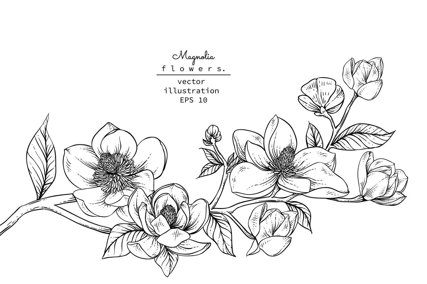 ramo de flor de magnólia vetor