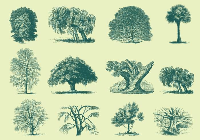 Ilustrações de árvores verdes vetor