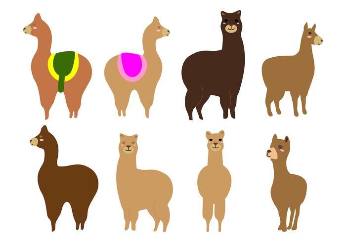Vector de alpaca ou lama livre