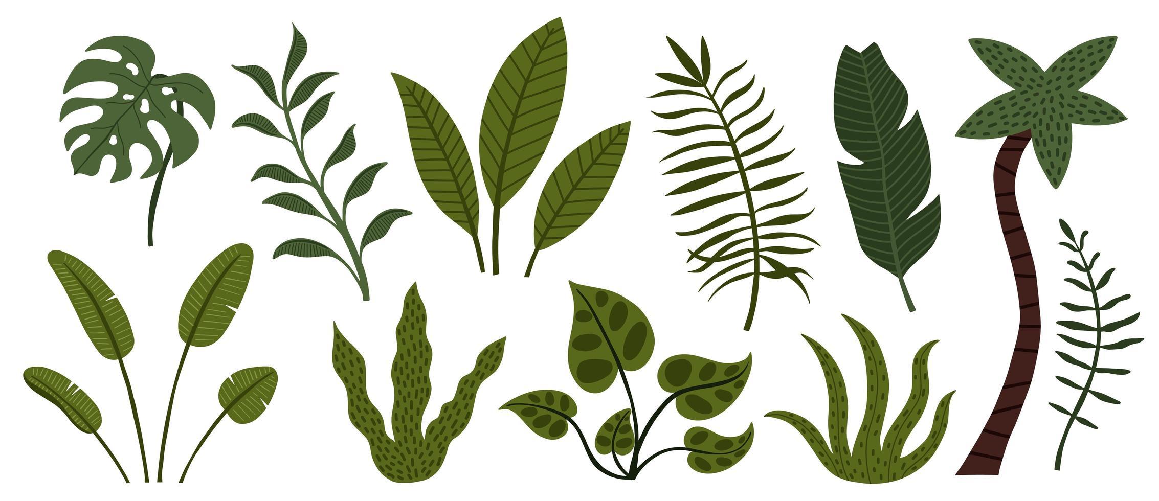 conjunto de folhas e árvores da selva tropical desenhada à mão vetor