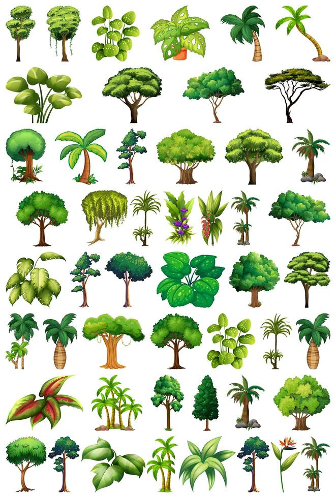 conjunto de variedades de plantas e árvores vetor