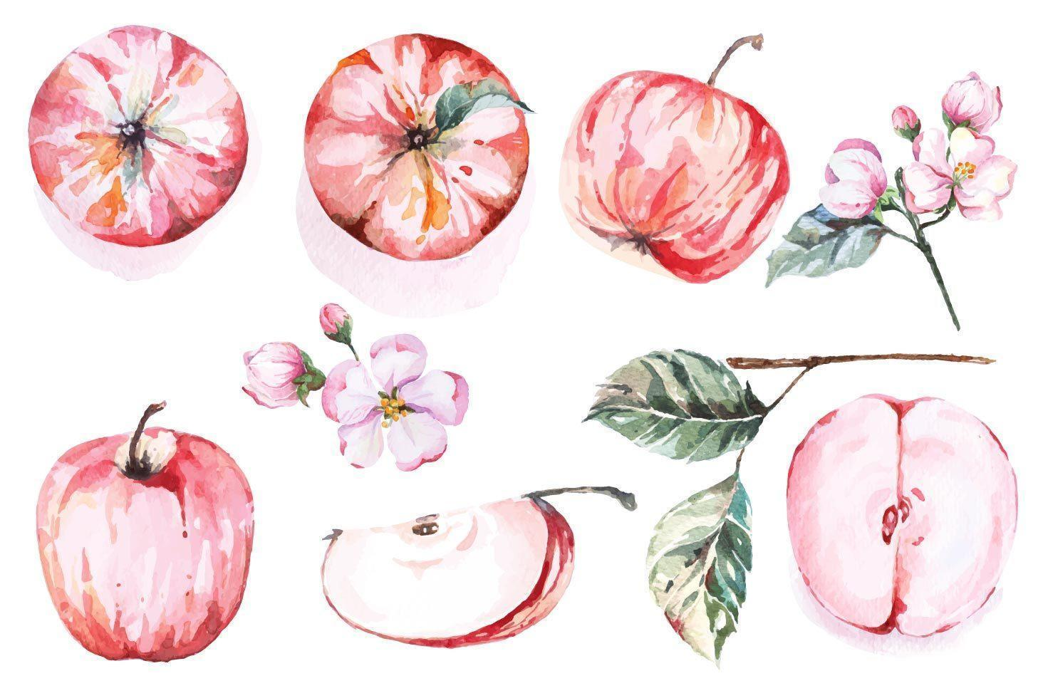 conjunto de maçã vermelha desenhada à mão em aquarela vetor
