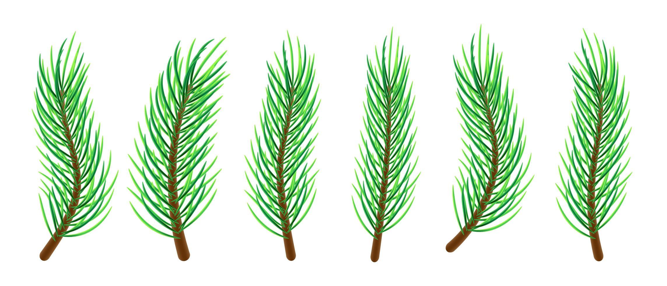 galhos de árvore de natal vetor