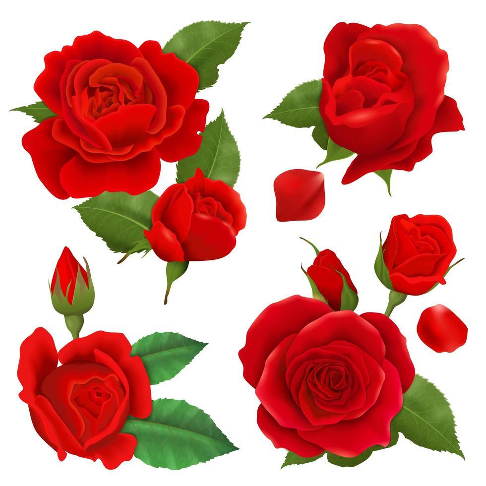 conjunto de flores rosa realista vetor